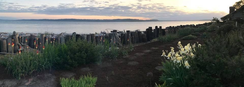 Sunset over the Puget Sound with a garden in the foreground and the Puget Sound in the background.